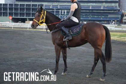 Star Witness colt - 22 August