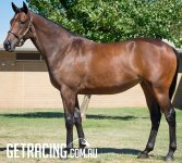 WRITTEN TYCOON ex SPECIAL EPISODE (by Redoute's Choice) Bay Filly - photo 1/3/16 at Inglis Sales