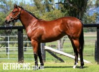 Stratum x No Comment Filly