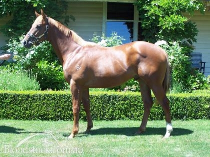Lot 7 - Tasmanian Magic Millions Sale