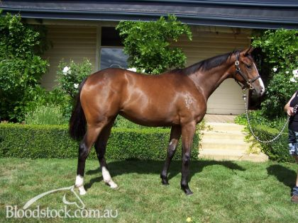 Lot 14-Tasmanian Magic Millions Sale