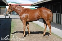 Testa Rossa x Fromage filly conformation