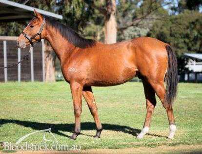 Highly promising colt kept from the sales to race ourselves; here's your chance!