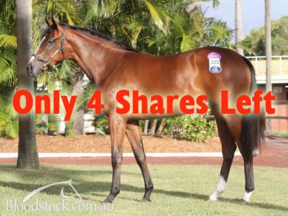 Northern Meteor filly - family of Alinghi