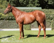 CRACKING MAGIC MILLIONS FILLY