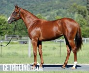 Nicconi/Gold Licence Filly