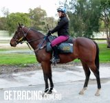 The Foxwedge colt is coming along beautifully and we expect him to be ready for an early 2yo campaign