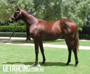 ATHLETIC RUNNING COLT WITH GREAT PEDIGREE!!!