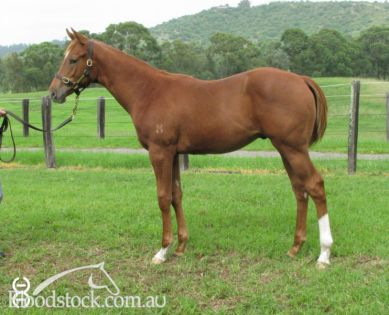 STAR WITNESS weanling colt sold for $60,000