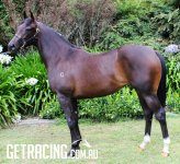 "Stunning So You Think Filly - Being Set for the ""Karaka Millions"""