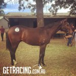 Lot 18 - Scone Inglis Yearling Sale