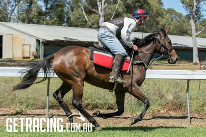 ALL TOO HARD x PAS DE DEUX Filly in pre-training 13/10/17