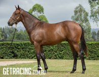 STUNNING COLT BY GREAT YOUNG SIRE FROM TWO YEAR OLD FAMILY