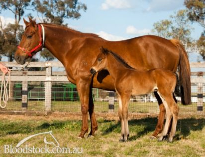 Air She Goes Again with her 2012 Myboycharlie filly