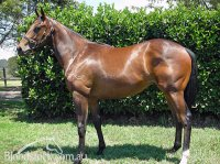 Choisir x Carlton Show Filly at Wild Oaks Spelling Farm