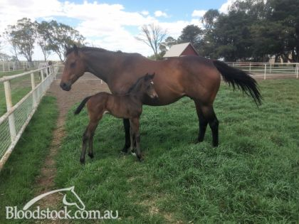 Mare with 3 day old filly foal