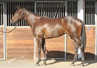 Photo after purchase at Inglis Newmarket complex Lot 96
