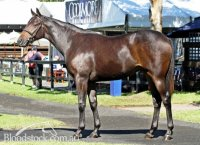 Encosta De Lago x Fusaichi Rose Filly