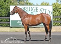 Zabeel Filly Conformation