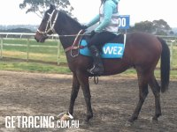 Exceed and Excel colt in work August 2015