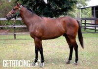 Rising two-year-old by Stryker (ex Absolute Harmony)