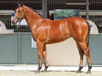 FASTNET ROCK ex DYNAMIC LOVE Bay Filly 20/10/11 - Lot 532 Magic Millions