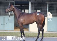 I Am Invincible x High Achiever Filly conformation