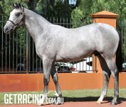 FASTNET ROCK ex DISTINCTLY (IRE) - at the Inglis Australian Easter Yearling Sale 6 April 2016