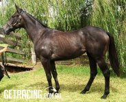 Imposing & Precocious Filly - Natural Athlete, Great Reign, Girth & Natural Muscle!!