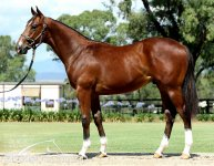 Genuine Stallion Prospect & Boom Black Type Family - Serious 2YO Prospect and Beyond