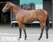 REDOUTE'S CHOICE ex LA PRALINE Colt - After we purchased him at the Yearling Sale 26 January 2016