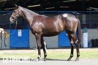 Hinchinbrook x Midnight Revels Filly
