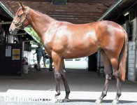 SNITZEL ex SEQUENTIAL MISS at the Inglis Classic Yearling Sales 7 February 2016
