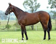 Smart Missile x Never 14 Filly Conformation