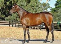 High Chaparral x Coogee Crown