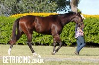 Show a Heart x Pekan Flight filly at Washpool Lodge (16 May 2015)