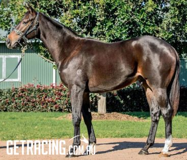 REDOUTE'S CHOICE x LOVETESSA Yearling COLT - 11 May 17.