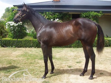 Lot 48 - Tasmanian Magic Millions Sale