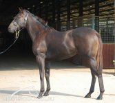 All American Colt Conformation