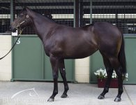 Lonhro filly at the sales - January 2014