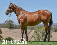 Strong filly with terrific hindquarter