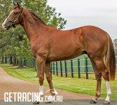 EXCELEBRATION ex LAURINEL ARGIE Chestnut Colt foaled 23-8-15