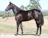 Lot 339 Vobis Gold Sale - February photo from Golden Grove as Vendor