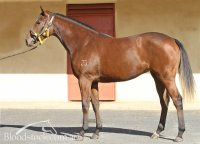 Reset x Farinocco filly