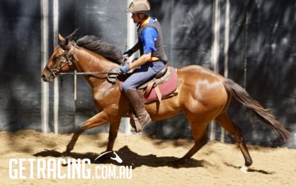 Snitzel Colt Under The Saddle at the Breakers - 21.3.1.7