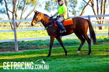A morning at track work with Tony McEvoy & FLR's Snitzel Colt - 8.5.17