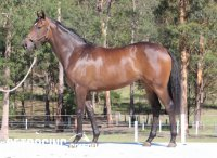 All Too Hard x Yalatif Filly Conformation