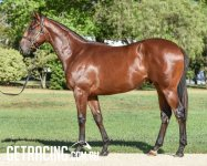Stunning athlete by great sire!!!