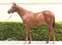 Wanted x First Land Filly Conformation