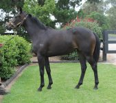 ARLINGTON filly to be trained by DAVID PFIEFFER!